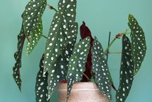 houseplants to look for