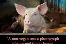 vegan spirit