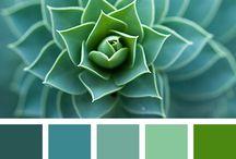 paleta de color