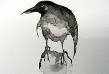 magpies and other corvids / by Anna Ball