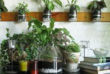 Apartment Gardening / by Nancy Wilkins