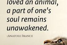 Pet quotes