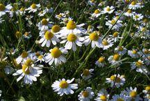 Homeopathic Remedies / Homeopathic Remedies