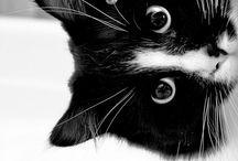 Zee Cats!