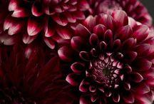 belles photos de plantes