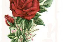 kırmızı gul