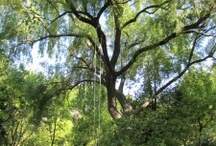 Trees and swings