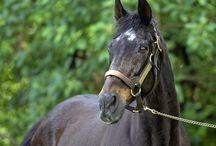 Lord Avie, Сhampion / Racing Legends
