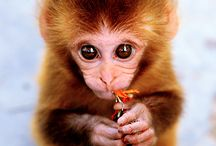 állatok / cuki állatokról