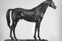 FeliceCalchi 's Horse Anatomy / www.felicecalchi.com