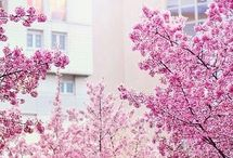 krajinky,stromy,kvety
