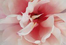 Sooks Flowers