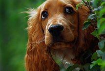"""A / DOGS / A afeição e a companhia deste animal são alguns dos motivos da famosa frase: """"O cão é o melhor amigo do homem"""", já que não há registro de amizade tão forte e duradoura entre espécies distintas quanto a de humano e cão."""