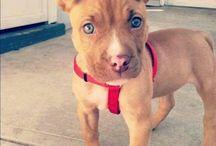I wanna get a puppy so bad