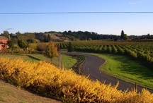 """""""Roads"""" along the Wine Road / Follow one of these roads and find adventure."""