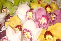 Orchids / Our Orchids come from Asia and Europe, and some from Hawaii, amazing flowers, always make an impact!