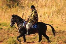 Le Basuto / En 1822, les populations locales ont vu leur premier cheval et ont formé la nation Basotho sous la direction de Moshoeshoe. En 1800 l'arrivée des Européens reconnu les Basotho comme une race a par entière en 1850 ou peut-être un peu plus tard.