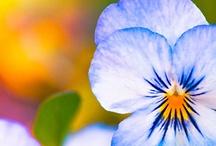 Flowers / by Jill Verbick