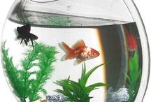 Fish / by Ariel Katowice