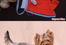 psi oblecky