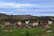 Extremadura / viajar por Extremadura y visitar lugares idílicos.