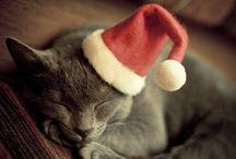 Animales Vestidos Navidad