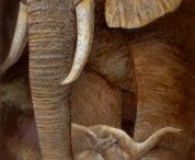 I heart elephants / by Yolanda Cole