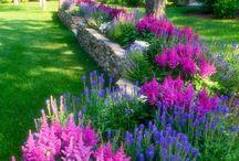 kytky zahrada