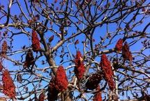 Trees / by laura daglio