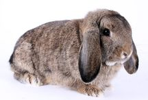 Most gorgeous rabbit breeds