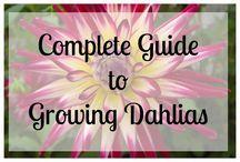 Gardening Blooms / Helpful hints for flower growing.
