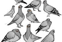 Holuby pro holuba :D