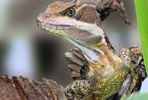 06. reptiles