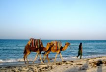 Tunis / Get cheap flights from Washington to Tunis, Africa. Search on FlyABS for cheap flights and airline tickets to Tunis from Washington. http://www.flyabs.com/washington-to-tunis