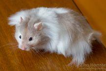 Kawaii world of Hamsters / Hamsters