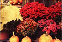 Fall Is Here - Things for fall / Things that are essential for the home during the fall/winter season