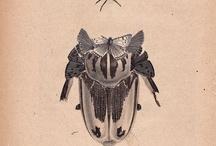 immagini insetti