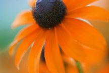 Flowers / by Mich Ledonne