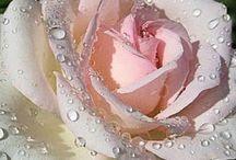 Fleurs rose mur