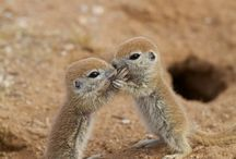 Animals / Celebrating the cuteness and strength of beautiful animals