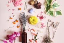 Inspirasjon blomster
