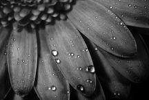 Black & White  / by Mieschell Wills