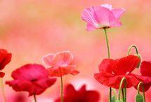 maki i inne kwiaty