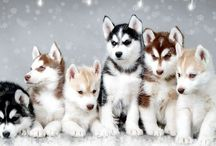 Puppies! / by Sandra Gaylord