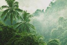 { Jungle }