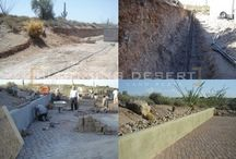 Landscaping / by Blooming Desert Pools & Landscapes