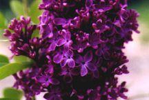 Favorite Flowers / by Cheryl Smith Reiter