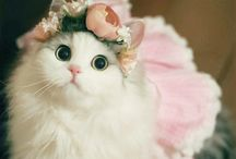 My Fav Kitties