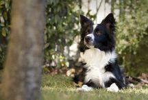 Cani, gatti e altri animali che ci fanno vivere meglio