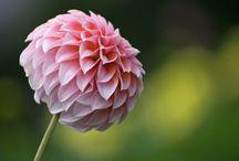 ~Flowers~ / by Emily Lampert